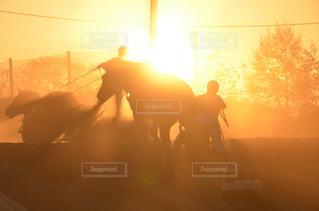 夕日,ばんえい競馬,輓馬