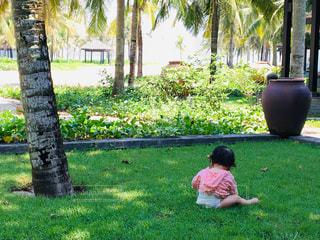芝生の写真・画像素材[2073025]