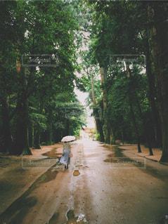女性,雨,傘,神社,後ろ姿