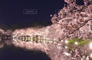 弘前公園夜桜の写真・画像素材[3072636]