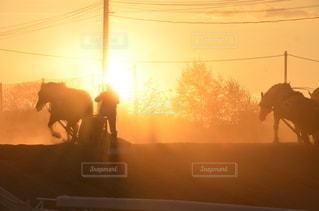 帯広ばんえい競馬の写真・画像素材[3396315]