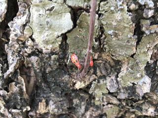 自然,夏,南国,沖縄,虫取り,yuntaway,ユンタウェイ,赤い虫