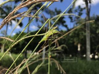 自然,夏,南国,沖縄,虫取り,おんぶ,バッタ,yuntaway,ユンタウェイ
