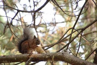 枝にリスの写真・画像素材[743016]