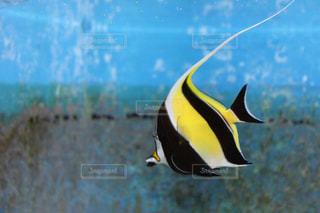 魚の写真・画像素材[616928]