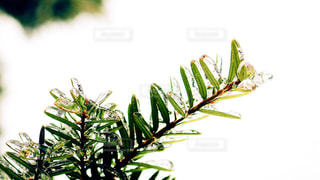 近くの植物のアップの写真・画像素材[879926]