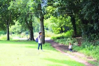 自然,森林,川,田舎,子供,ママ,ママと子供