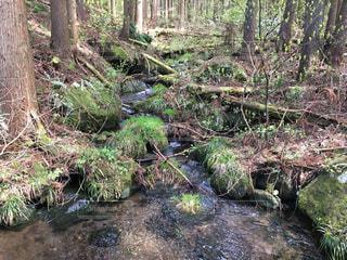 森の中の木の写真・画像素材[766832]