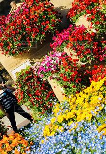 色とりどりの花と僕♪の写真・画像素材[891604]
