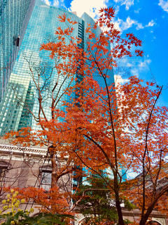 高層ビルに映える紅葉♪の写真・画像素材[891973]