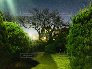 風景,夜,夜景,木,屋外,緑,景色,樹木,ライトアップ