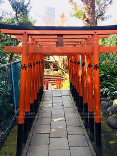 風景,建物,屋外,東京,国内,神社,鳥居,景色,観光,上野,石畳,旅行,国内旅行,稲荷神社,花園稲荷神社