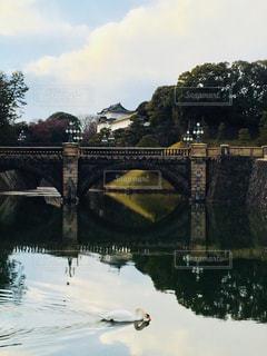 自然,風景,空,建物,橋,動物,鳥,木,屋外,東京,国内,緑,雲,水,水面,池,景色,観光,樹木,旅行,白鳥,皇居,お堀,国内旅行,お濠