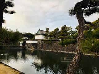 皇居のお堀を松と共に♪の写真・画像素材[1009855]