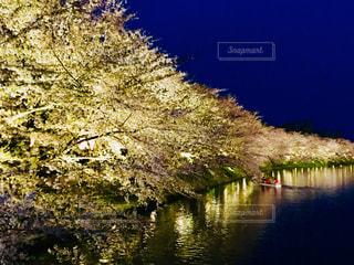 青森 弘前桜祭りの夜桜♪の写真・画像素材[1017312]