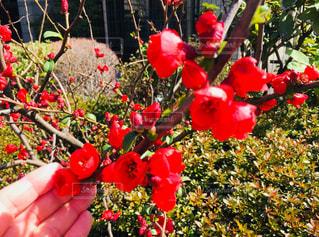 春の訪れ♪の写真・画像素材[1036017]