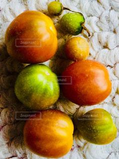 バルコニーで獲れた季節外れのミニトマト♪の写真・画像素材[1084288]