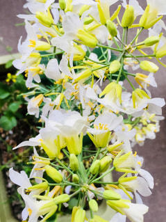 育ち過ぎた家庭菜園の花♪の写真・画像素材[1085336]
