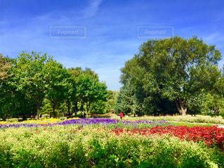 自然,風景,空,公園,花,秋,木,屋外,海外,緑,植物,雲,晴れ,晴天,フラワー,葉っぱ,葉,景色,草,樹木,旅行,中国,海外旅行,秋空,インスタ,陽ざし,インスタ映え,ハルビン,ハルピン,太陽島