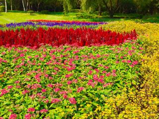 カラフルな花々の1枚♪の写真・画像素材[1544443]