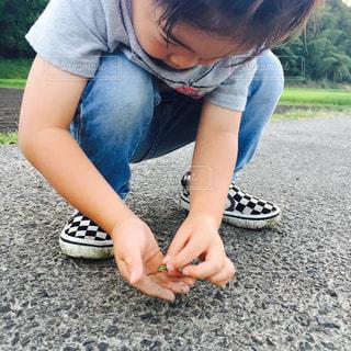 田舎,虫取り,田んぼ,夏休み,カエル,お散歩,アマガエル,田んぼ道