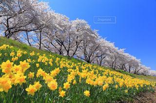 春 - No.620092