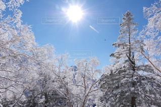 冬季八ヶ岳登山 - No.771663