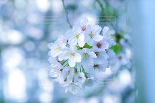 近くの花のアップ - No.908983