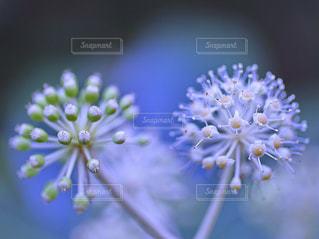 近くの花のアップ - No.908986