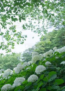 近くのフラワー ガーデンの写真・画像素材[1124638]