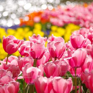 近くの花のアップの写真・画像素材[1370137]