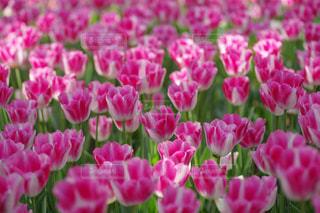 近くの花のアップの写真・画像素材[1370141]