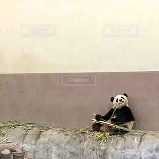 岩の上に座って黒い熊 - No.721263