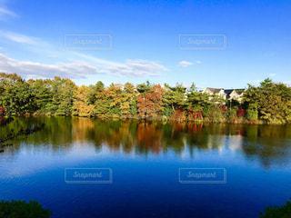 木々 に囲まれた水の大きな体 - No.863657