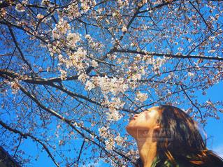 青空の中の桜の写真・画像素材[892327]