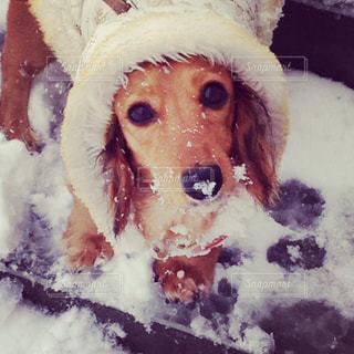 雪の日のお散歩の写真・画像素材[925536]