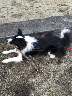 食いしん坊な犬の写真・画像素材[732125]