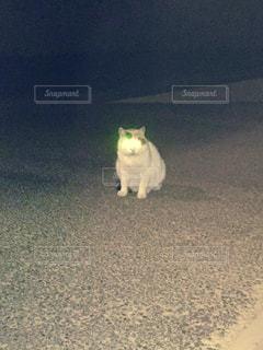 猫の写真・画像素材[653841]