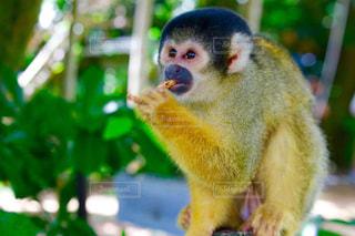 猿の写真・画像素材[675257]
