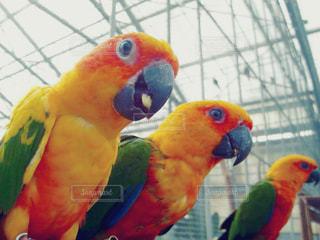 鳥,旅行,夏休み,掛川花鳥園,PassMe