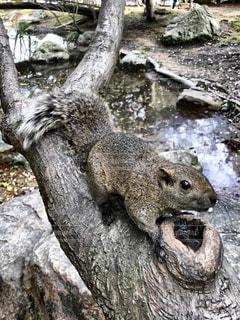 木のうえをちょろちょろの写真・画像素材[745366]