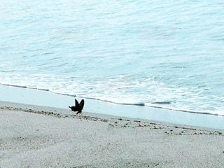 砂浜の上に犬の地位の写真・画像素材[1312892]