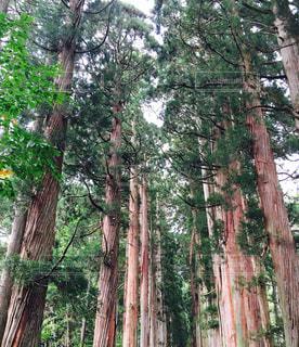 パワースポット,長野県,戸隠中社