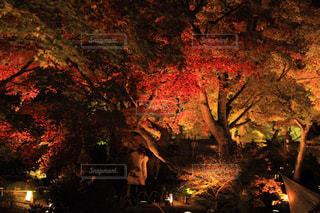 火に沈む夕日の写真・画像素材[799066]