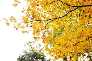 近くの木のアップの写真・画像素材[889291]