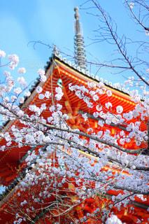 空,桜,清水寺,屋外,京都,オシャレ,一眼レフ,canon,キレイ