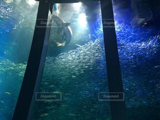 夏,水族館,楽しい,夏休み,八景島シーパラダイス,癒される,PassMe,夏のお出かけ