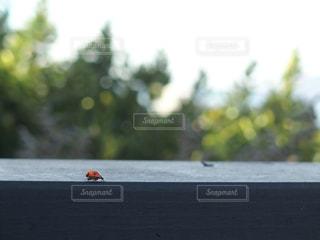 夏,アメリカ,虫取り,可愛い,サンフランシスコ,てんとう虫