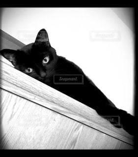 木製の表面の上に座って黒い猫の写真・画像素材[817087]