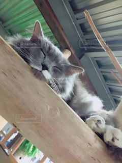 木製の椅子の上に横たわる猫の写真・画像素材[880450]